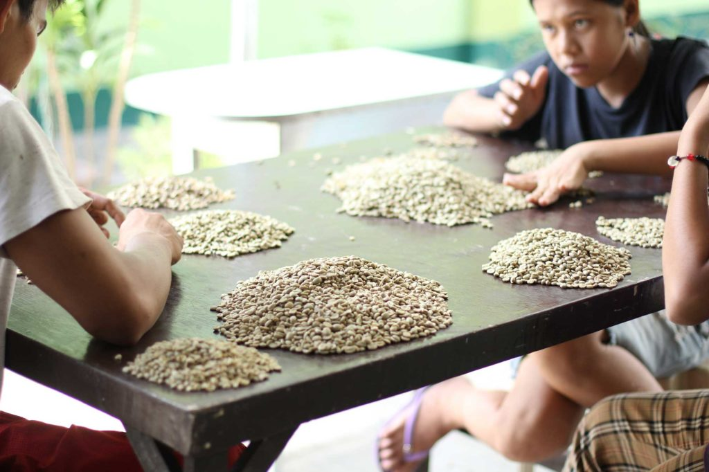 Sorting Civet Coffee